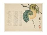 Persimmon, C.1854-59 Giclee Print by  Shunsei