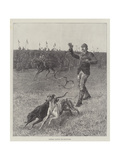 Coursing, Slipping the Greyhounds Giclee Print by S.t. Dadd