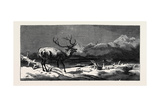 Coming Events Cast their Shadows before Them Giclee Print by Edwin Landseer
