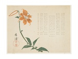 Tiger Lily, C.1861-64 Giclee Print by  Shumpo