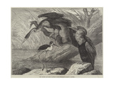 The Darter and Stilt Plover in the Zoological Society's Gardens Giclee Print by Samuel John Carter