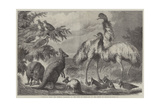 Australian Birds and Animals Presented by the Duke of Edinburgh to the Prince of Wales Giclee Print by Samuel John Carter