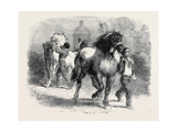 Sketch from The Horse Fair Giclee Print by Rosa Bonheur