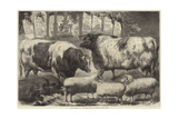 Prize Cattle, Pigs and Sheep, at the Smithfield Club Show Giclee Print by Samuel John Carter