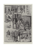 A New Hobby for School-Boys, the Kennel Club at Clayesmore School, Enfield Giclee Print by S.t. Dadd