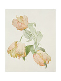Parrot Tulips Giclee Print by Sarah Creswell