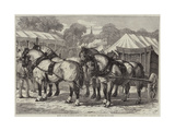 Meeting of the Lincolnshire Agricultural Society at Sleaford, First-Prize Team of Horses Giclee Print by Samuel John Carter