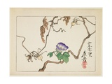 Vine and Seeds of Morning Glory, 1877 Giclee Print by Shibata Zeshin