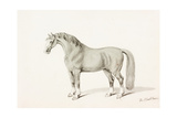 The Black Horse Giclee Print by Thomas Bewick