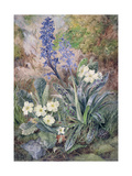 Purple Orchid and Primrose Giclee Print by Thomas Collier