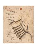 Mezashi to Tatamiiwashi Giclee Print by Teisai Hokuba