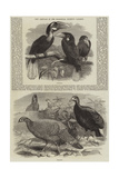 New Arrivals at the Zoological Society's Gardens Giclee Print by Thomas W. Wood