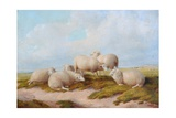 Sheep Giclee Print by Thomas Sidney Cooper