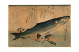 Bora Zu, Striped Mullet (Bora). [Between 1833 and 1836], 1 Print : Woodcut, Color ; 25 X 36.5 Giclee Print by Utagawa Hiroshige