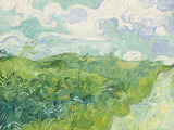Green Wheat Fields, Auvers, 1890 Giclee Print by Vincent van Gogh