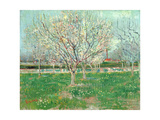 Orchard in Blossom, 1880 Giclee Print by Vincent van Gogh