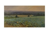 Turnip Field Giclee Print by William Cosens Way