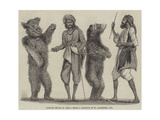 Dancing Bears in India Giclee Print by William Carpenter