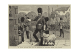 St David's Day, the Goat and the Drum-Major of the Royal Welsh (23Rd) Fusiliers Giclee Print by William III Bromley