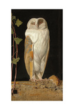 The White Owl, 1856 Giclee Print by William J. Webbe