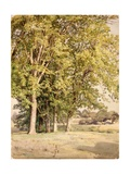 Maples in Chester County, Pennsylvania, 1889 Giclee Print by William Trost Richards