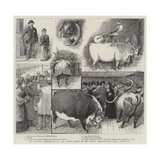 Our Artist's Impressions of the Cattle Show at the Royal Agricultural Hall, Islington Giclee-trykk av William Ralston