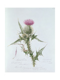 Scotch Thistle, Painted at Brantwood, 6th November 1866 Giclee Print by William James Linton