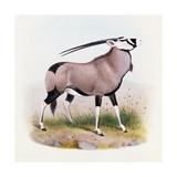 The Gemsbok, from 'The Book of Antelopes' Giclee Print by  Wolf & Smit