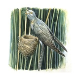 Birds Giclee Print