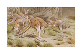 Giant Kangaroo Giclee Print