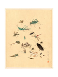 Frogs Snails and Insects Giclee Print