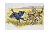 Leopard Cubs (Panthera Pardus) Giclee Print