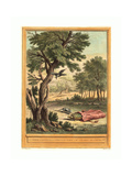 Quentin Pierre Chedel after Jean-Baptiste Oudry (French Giclee Print