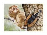 Violin Beetle or Banjo Beetle (Mormolyce Phyllodes) Lámina giclée