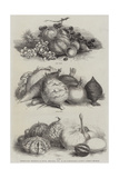 International Exhibition of Fruits, Vegetables, Etc, in the Horticultural Society's Gardens Giclee Print