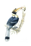 Birds, Coraciiformes, Great Hornbill, (Buceros Bicornis), Male Feeding, Female Sitting on Nest Impression giclée