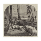 The Expedition in Search of Sir J Franklin, Arctic Bear on Board the Fox Giclee Print