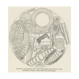 Infusoria Procured by Sir James Ross from the Bottom of the Antarctic Ocean Giclee Print