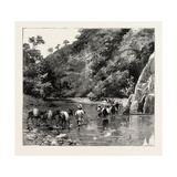 The Chin Lushai Expeditionary Force, a Mule Convoy Crossing the Loung Gut Choung Stream, 1890 Giclee Print