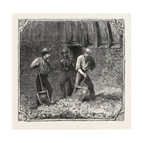 Hops and Hop Pickers, in a Kentish Hop Garden, Kent, England, Turning Hops in the Kiln, 1876, Uk Giclee Print