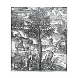 Collecting Incense from Pine Trees from 'Cosmographie Universelle', by Andre De Thevet, 1575 Giclee Print