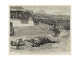 A Persian Derby at Teheran, the Winner of the First Race Falling Dead in Front of the Shah's Tent Giclee Print