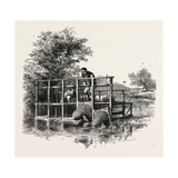 Eel Bucks on the Thames, Scenery of the Thames, UK, 19th Century Giclee Print