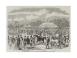 The Northamptonshire Agricultural Society's Show in Burghley Park, Near Stamford Giclee Print