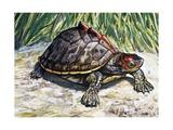Indian Roofed Turtle (Pangshura Tecta or Kachuga Tecta), Geoemydidae Giclee Print