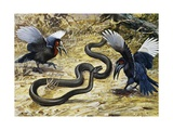 Black Mamba or Black-Mouthed Mamba (Dendroaspis Polylepis), Elapidae Giclee Print