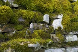 Small Buddha Sculpture on Mossy Drystone Wall, Harnham Buddhist Monastery, Northumberland, Uk Photographic Print