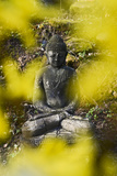 A Buddha Statue in the Garden of Zen Temple Ryumonji Surrounded by Forsythia Photographic Print