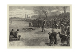 A Pitman's Holiday, Rabbit Coursing with Greyhounds Giclee Print
