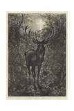 A Christmas Legend, the Stag of St Hubert Giclee Print